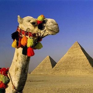 zhivotnie_egipta